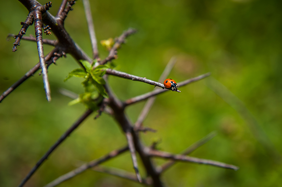 Fotos-de-orquideas-do-Courel-27