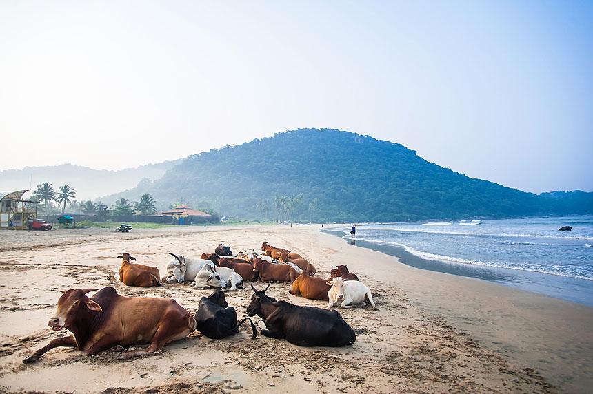 Viaje a India del Sur 2017-1621